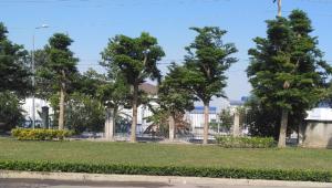Công ty cây xanh phú mỹ