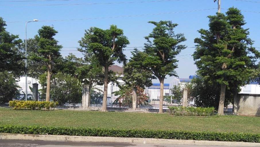 Cây Xanh Khu Công Nghiệp Phú Mỹ