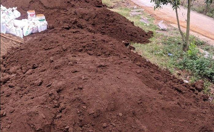 Đất trồng cây phú mỹ