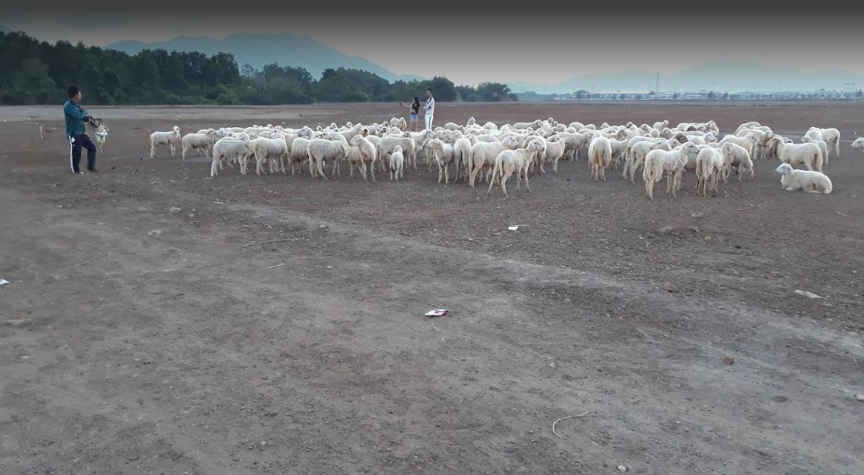 Đồi cừu Vũng Tàu